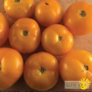 tomate jaune