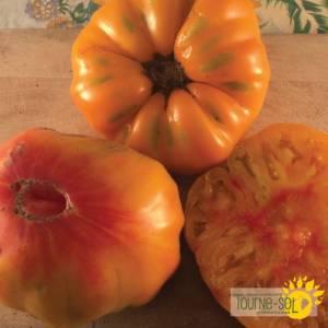 tomate orange